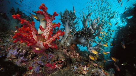 corals, algas, small fishes