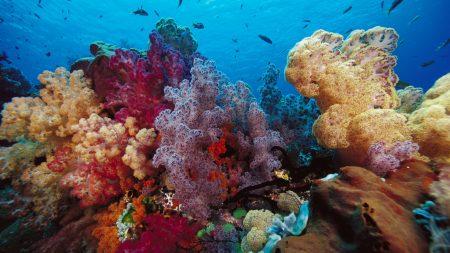 corals, multi-colored, underwater