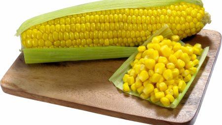 corn, ripe, cob