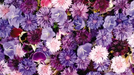 cornflowers, pansy, flowers
