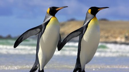 couple, penguins, hands