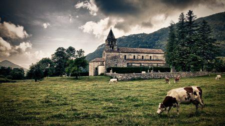 cows, castle, glade
