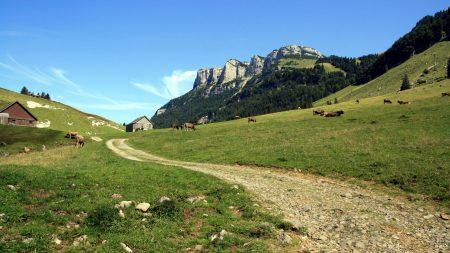 cows, mountains, sky