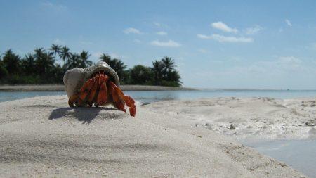 crab, sand, beach