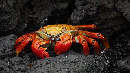 crab, stone, shell