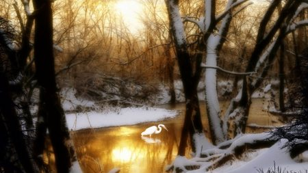 crane, wood, lake