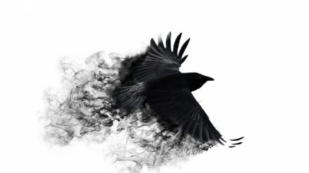 crow, wings, bird swing