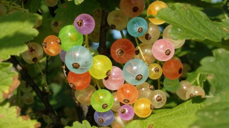 currant, berry, multi-colored