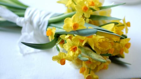 daffodils, flowers, bouquet