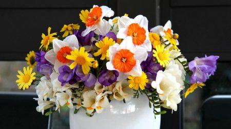 daffodils, freesia, flowers