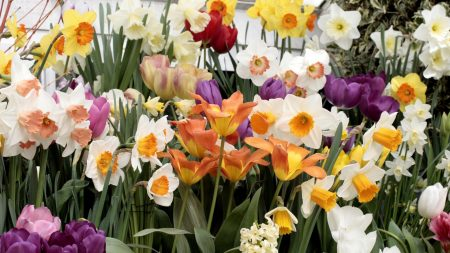 daffodils, hyacinths, tulips