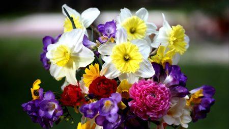 daffodils, roses, freesia