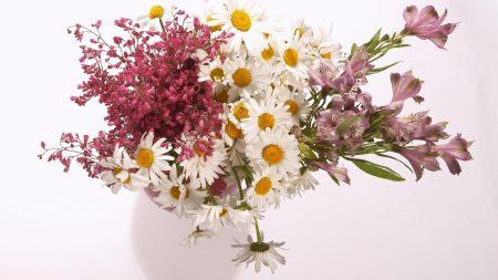 daisies, alstroemeria, flowers