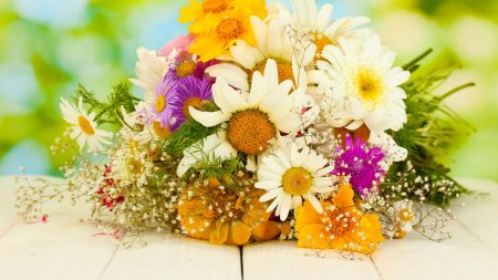 daisies, asters, gypsophila
