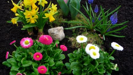 daisies, daffodils, tulips
