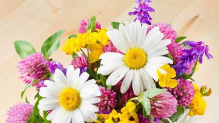 daisies, flowers, clover