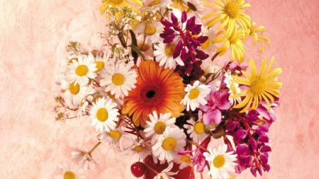 daisies, gerbera, flower