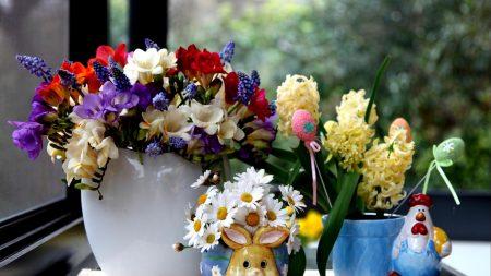 daisies, hyacinths, muscari