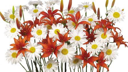 daisies, lilies, bouquet