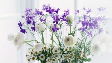 daisies, peonies, flowers