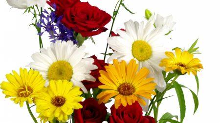 daisies, roses, gerbera