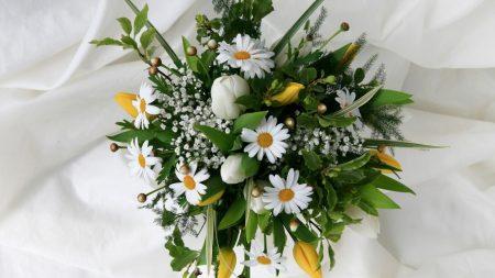 daisies, tulips, gypsophila