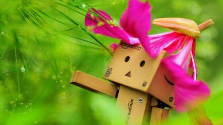 danboard, flower, hat