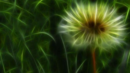 dandelion, lines, lights
