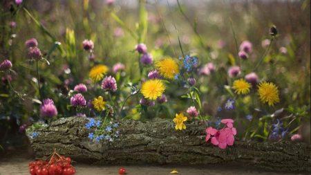 dandelions, clover, forget-me-