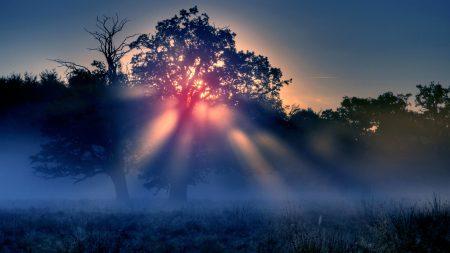 dawn, fog, morning