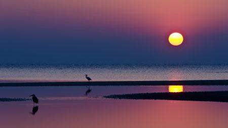 decline, herons, sun