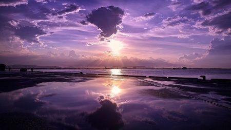 decline, lilac, sun