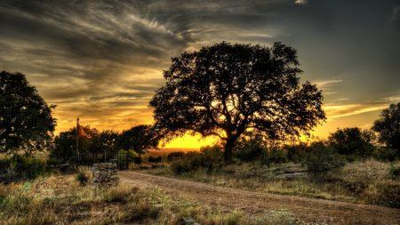 decline, tree, sky