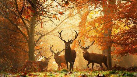 deer, forest, leaves