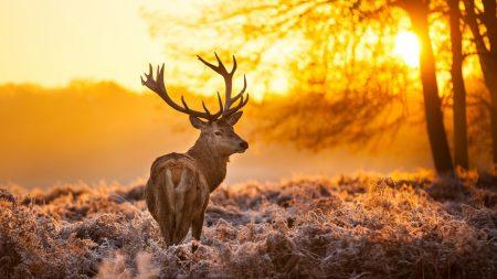 deer, frost, grass