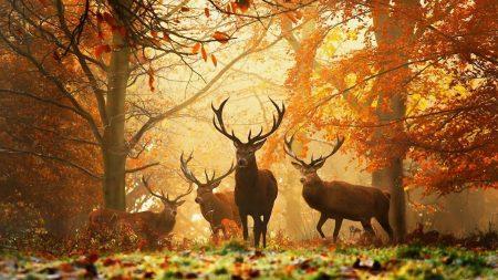 deer, grass, leaves