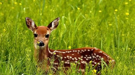 deer, grass, spotted