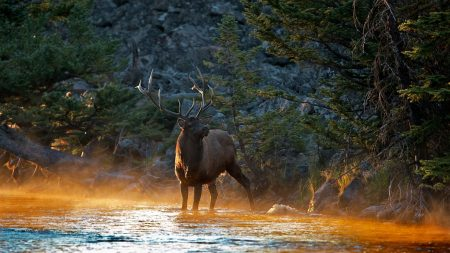 deer, river, mountains
