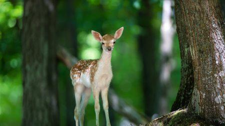 deer, wood, views