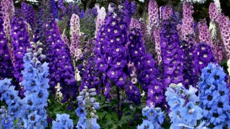 delphinium, colorful, flowers
