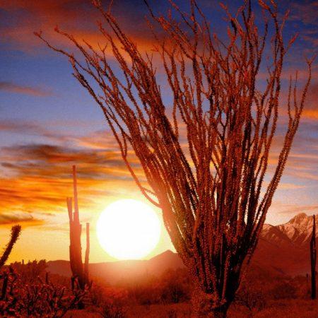 desert, bushes, sun
