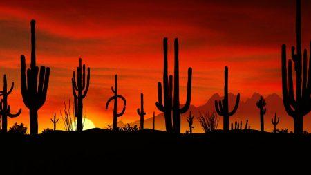 desert, cactuses, outlines