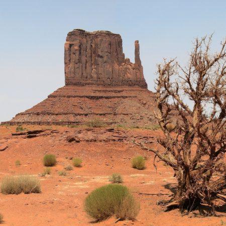 desert, canyon, vegetation
