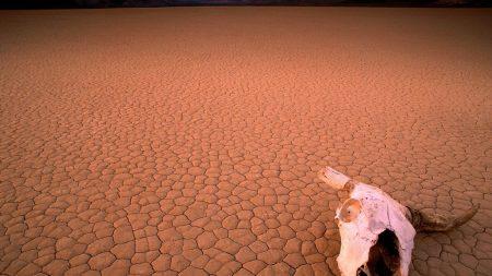 desert, drought, skull