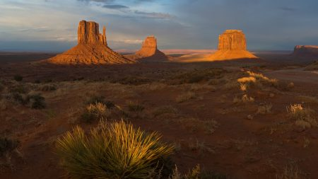 desert, evening, vegetation