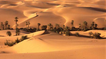 desert, oasis, vegetation