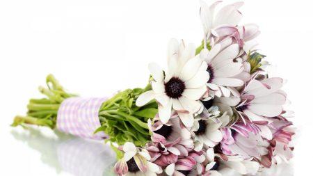 dimorfoteki, flowers, bouquet