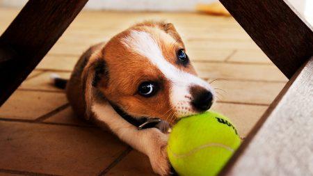 dog, ball, play