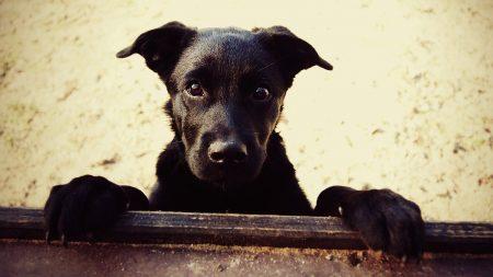 dog, black, legs