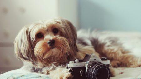 dog, camera, bed